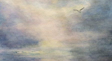 cropped-2016-0923-seagull7.jpg